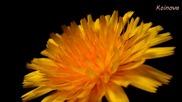 Цъфтеж на цветя и красива природа авторски