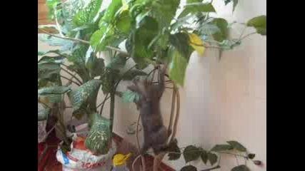 Коте Се Катери По Цвете