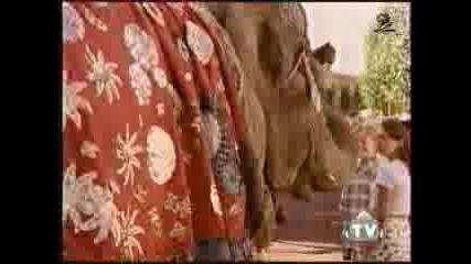 Слонска Памет