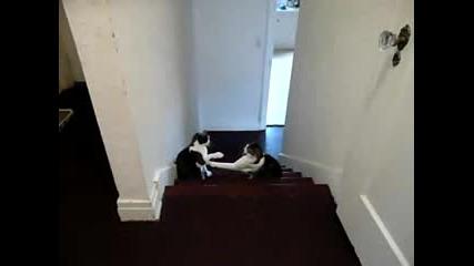Котешки бокс :)