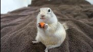 Сладка катеричка приема ласки и храна от стопанката си.