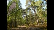 С прохладата и пойните птици на гората