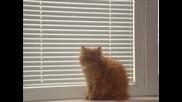 Моето Коте