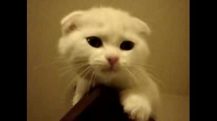 Малко Котенце Мяука