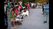 Най-лакомото куче на изложбата на Бркс, гр. Варна 2010 г.