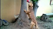 Най-здравото куче което сте виждали