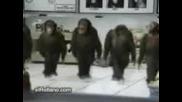 Smeshen maimunski tanc ;d