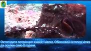 5 Факта, които не знаете за октоподите