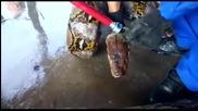 Хванаха змия, дълга почти 8 метра