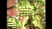 Seki Princ - Case pune rakije ( Biseri arhive )