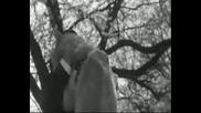 сцени от филма Хачико от 1987 старата версия