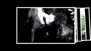 Dogo Argentino - Amazing Dog