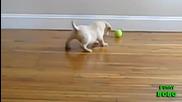 Кученца срещу Тенис топка - Компилация