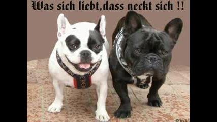 Анимирани Кученца