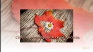 В последната минута на ноември - Мира Дойчинова