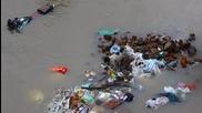 Улично куче спасява кученцата си в река Ченай