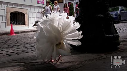 Разходка с бели гълъби в Стария град - Пловдив
