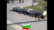 Топ 10 смешни български снимки - Част 4