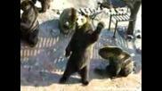 Няма друга такава мечка