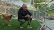 Глутницата | Сизър Милан: Добър стопанин - добро куче | NG Wild Bulgaria