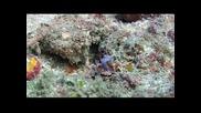 Чудният подводен свят на Микронезия.остров Яп.