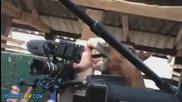 Смях ! кон се опитва да захапе репортер