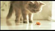 Mera - Fussy - Mera Cat (3)