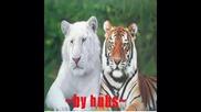 kuchek tigara~by hubs~