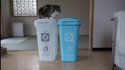 Котето Мару търси мартеничката си .. Шишко ..