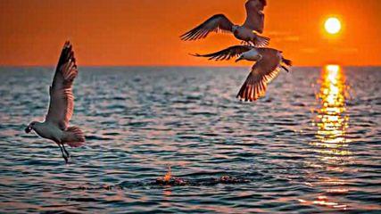 Чайки успокойтесь сердцу больно
