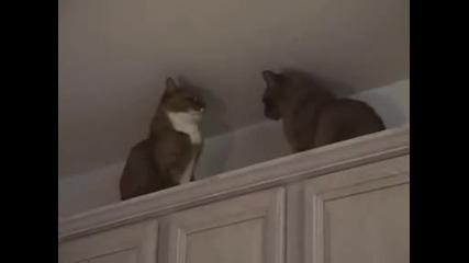 котка и котка двубои