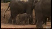 Слонса небрежност