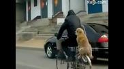 Това куче изуми всички