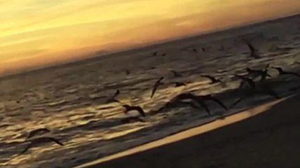 Птици в полет.. /адаптиран превод*/.. Софи Зелмани