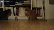 Котки срещу метроном