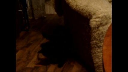 Проста котка гони лазарче