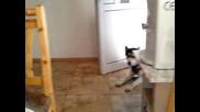 Хъски Се кара за кухнята...