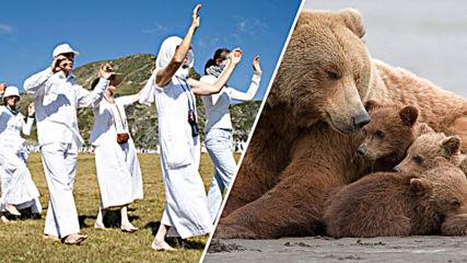 Мечка е майка на годината, световен мир и хармония в Рила