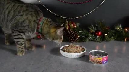 Трудно е да си котка на Коледа