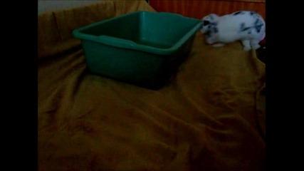 Зайченцето бяло цял ден си играло