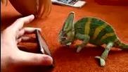 toi Ne haresva telefoni!!! [smqh]