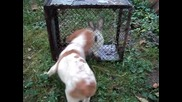 Чочо и заек