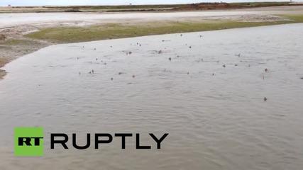 Десетки акули заснети да плуват край Съсекс, Англия