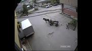 Цигани крадат метални капаци до Гдбоп