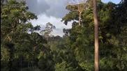 Красотата на природата - Джунглите