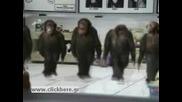 Танца На Маймуните