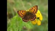 Butterflies & flowers - Mozart Symphony No 40 ( Nicolas De Angelis)
