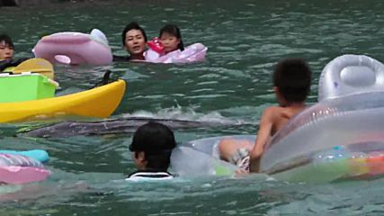 Japan: Tourists in the notorious Taiji cove play with dolphins ahead of annual hunt