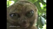 Lemur Se Kokori :d
