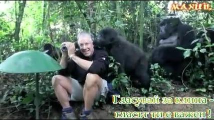 Маймуни се бъзикат с човек ...